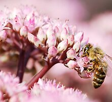 bee at work by mc27