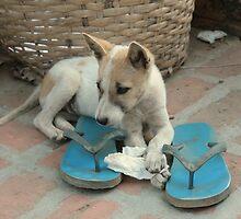 Flip-flop puppy by Denzil