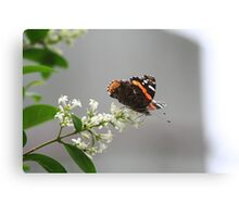 Red Admiral #2 Canvas Print