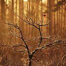 Last leaf left by Alan Mattison