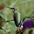 Singing Hummingbird by patti4glory