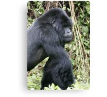 Silverback Gorilla II Canvas Print