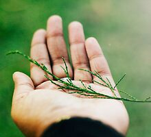 nobody,not even the rain,has such small hands. ~e.e.cummings by Jessica  Lia