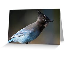 Steller's Jay ~ Provincial Bird of British Columbia, Canada Greeting Card