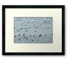 crowded pool Framed Print