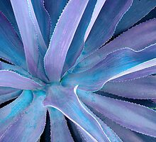 Aloe in Blue by Rosalie Scanlon