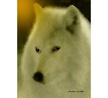 WOLF ~ GENTLE SPIRIT Photographic Print