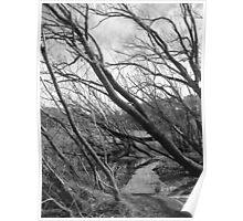 Trees at Lake Daylesford Poster