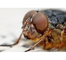 Fly Eye Photographic Print