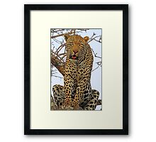 Majestic dominant male leopard(This is my tree!) Framed Print