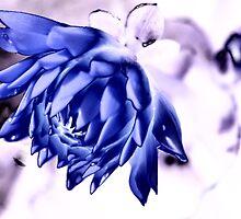 Blue Dalhia by Peggy  Zinn