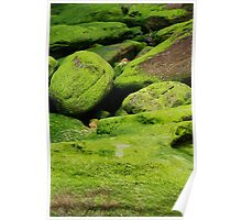 Rocks & moss IV Poster