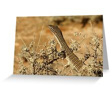 "Juvenile Sand Monitor ""Varanus gouldii"" small file Greeting Card"