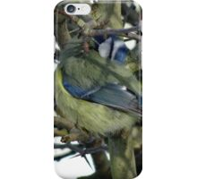Preening Blue Tit iPhone Case/Skin