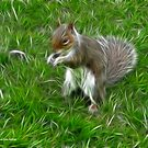 Grey squirrel by Jo Newman