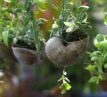 Flowers in snails - Thailand by chrisfx