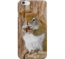 Red Squirrel - Dinner Time iPhone Case/Skin