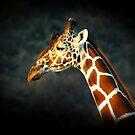 Giraffe by Stephie Butler