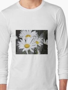 Chamomiles in the garden 5 Long Sleeve T-Shirt