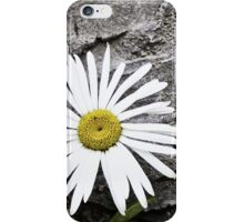 Chamomiles in the garden 8 iPhone Case/Skin
