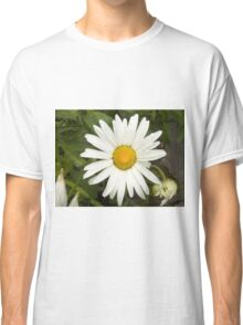 Chamomiles in the garden 10 Classic T-Shirt