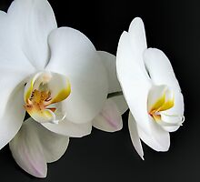 Oriental Flavor by Judy Clark