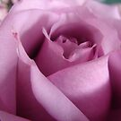 One Purple Rose by Diane Petker