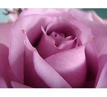 One Purple Rose Photographic Print