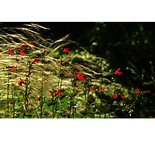 In the Weeds Photographic Print