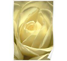 Classic White Iceberg Rose Poster