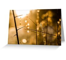 Warm Winter Light Greeting Card