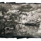 Morikami Ripples  by Rene Hales