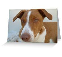 Mongrel dog Greeting Card