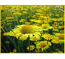Sunny yellow paradise Photographic Print