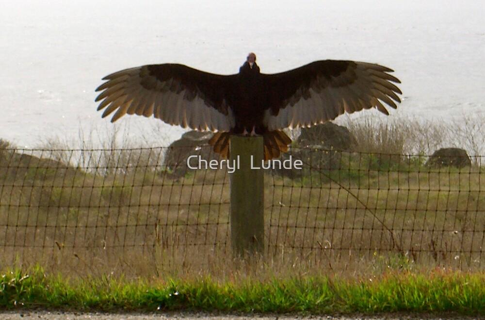 Freedom by Cheryl  Lunde