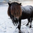winter horse by JorunnSjofn Gudlaugsdottir