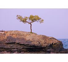 Where is this tree growing on rocks? Photographic Print