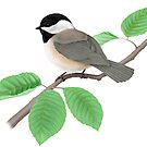 Chickadee by SigneNordin
