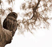 Wacissa Owl: Sepia Tone by Troy Spencer