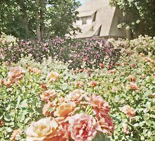 Vintage English Style Rose Garden by BrookeRyanPhoto
