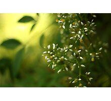 Thursday green Photographic Print