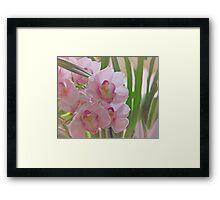 Orchid Myth Framed Print