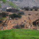 Giraffe Hill by Anne Smyth