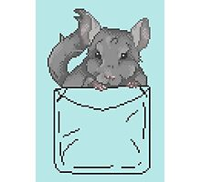 Pixel Pocket Chinchilla Photographic Print