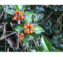 Merry Berries Photographic Print