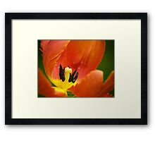 Dreaming in Color.  Framed Print