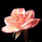 Mystic Rose by Sheryl Kasper