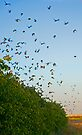 Sparrows flight. by Eyal Nahmias