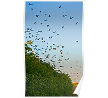 Sparrows flight. Poster