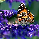 Pretty Little Butterfly by Curtiss Simpson